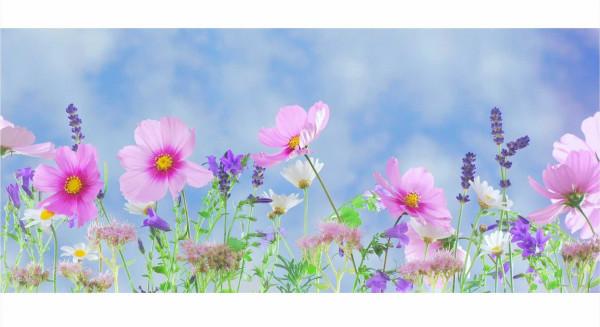 Wandbild WILD FLOWERS