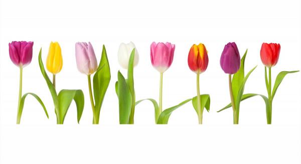 Küchenrückwand Tulip