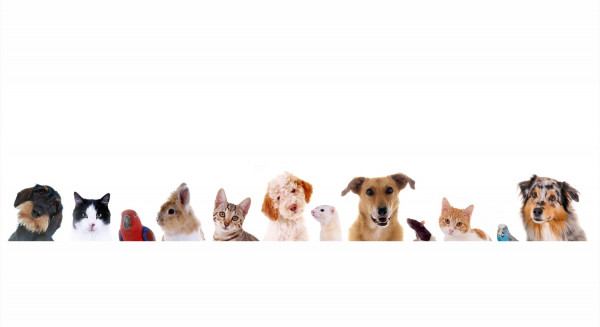 Wandbild PETS